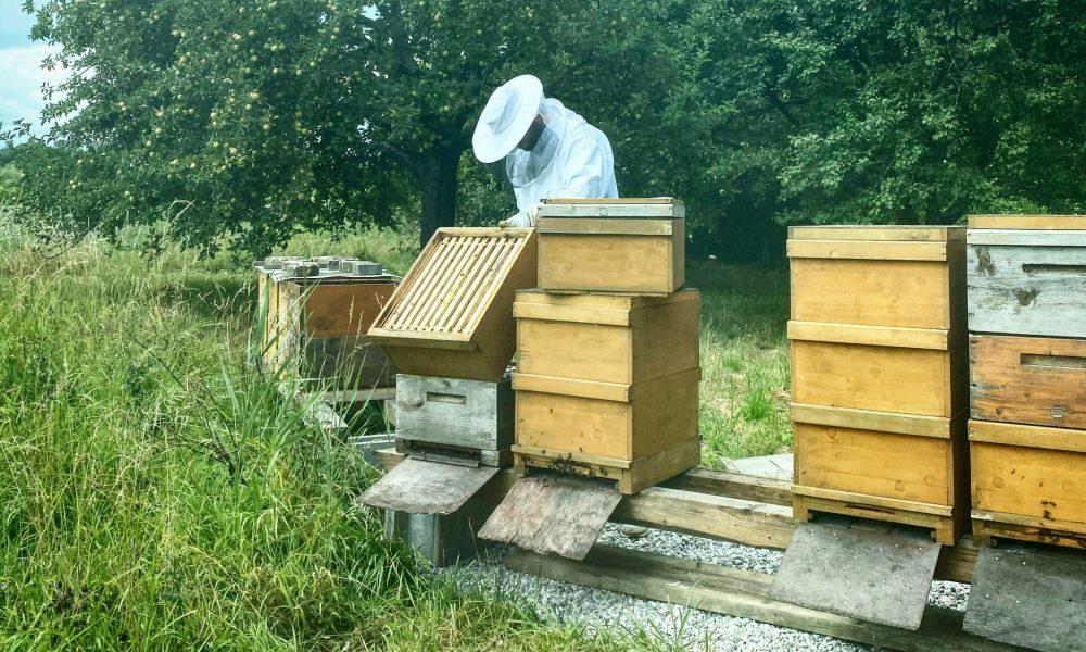 Produktion_Bienenkästen_Wiese-min